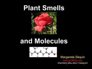 Plant Smells and Molecules - Margareta Séquin